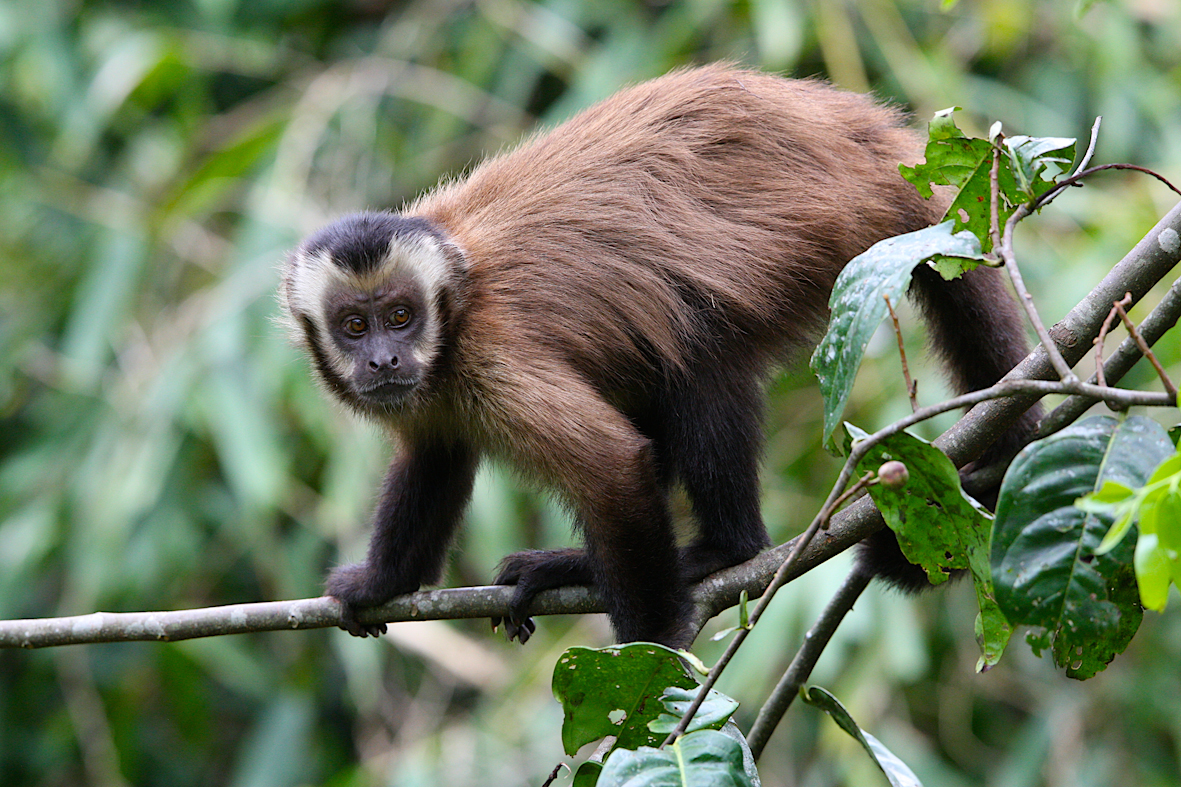 monkey, rejser, costa rica, familieferie